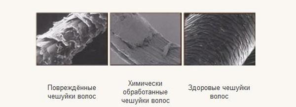 Здоровые и поврежденные чешуйки волос