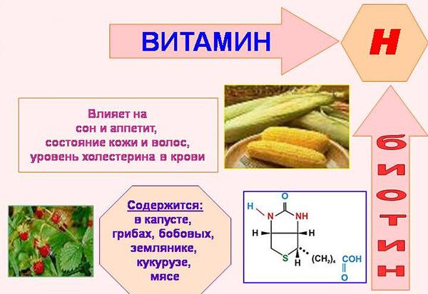 Функции биотина