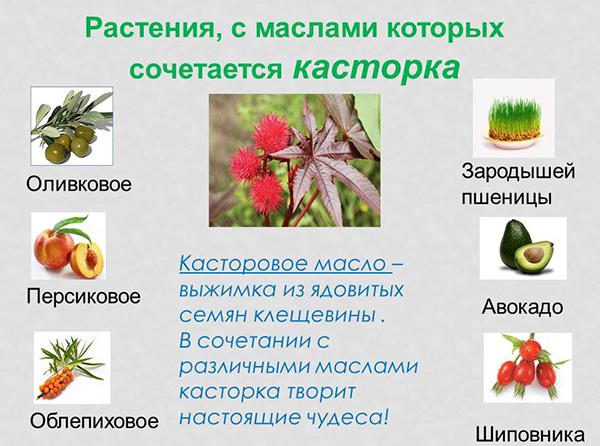 Растения, с маслами которых сочетается касторка